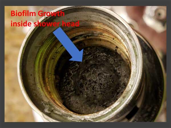 bio-film slime